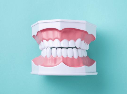 通常 入れ歯